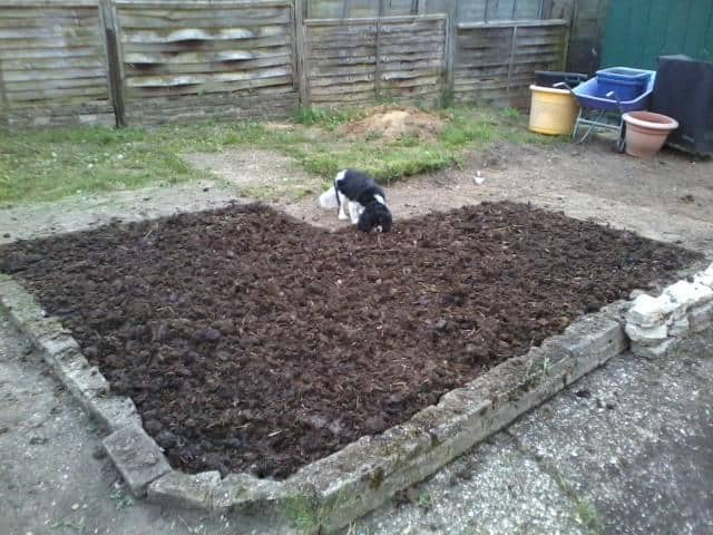garden soil improvement