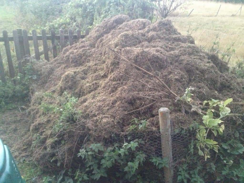 Moss and thatch removed after lawn scarification