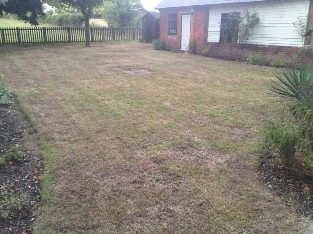Lawn restoration - scarification