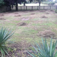 lawn scarification process