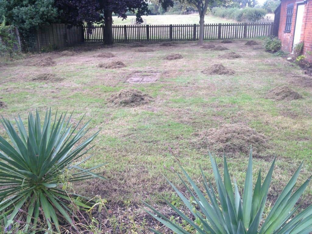 lawn scarification process