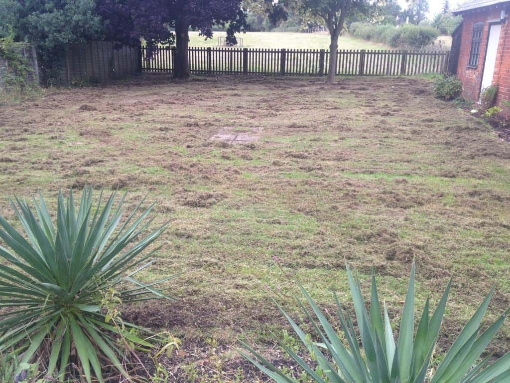 Lawn being scarified - moss and thatch coming out