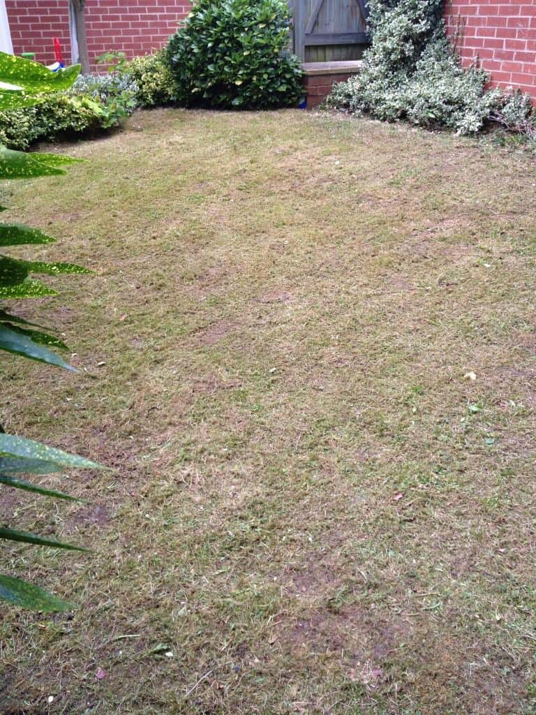 Lawn after cut