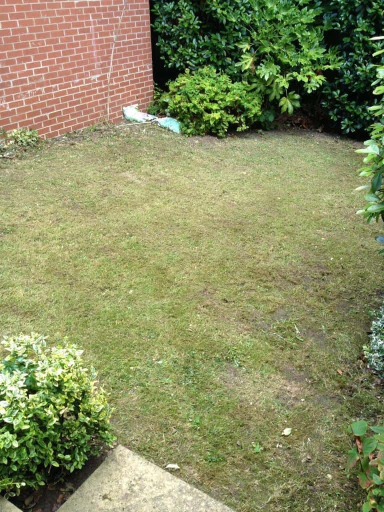 Lawn mowing - Caversham