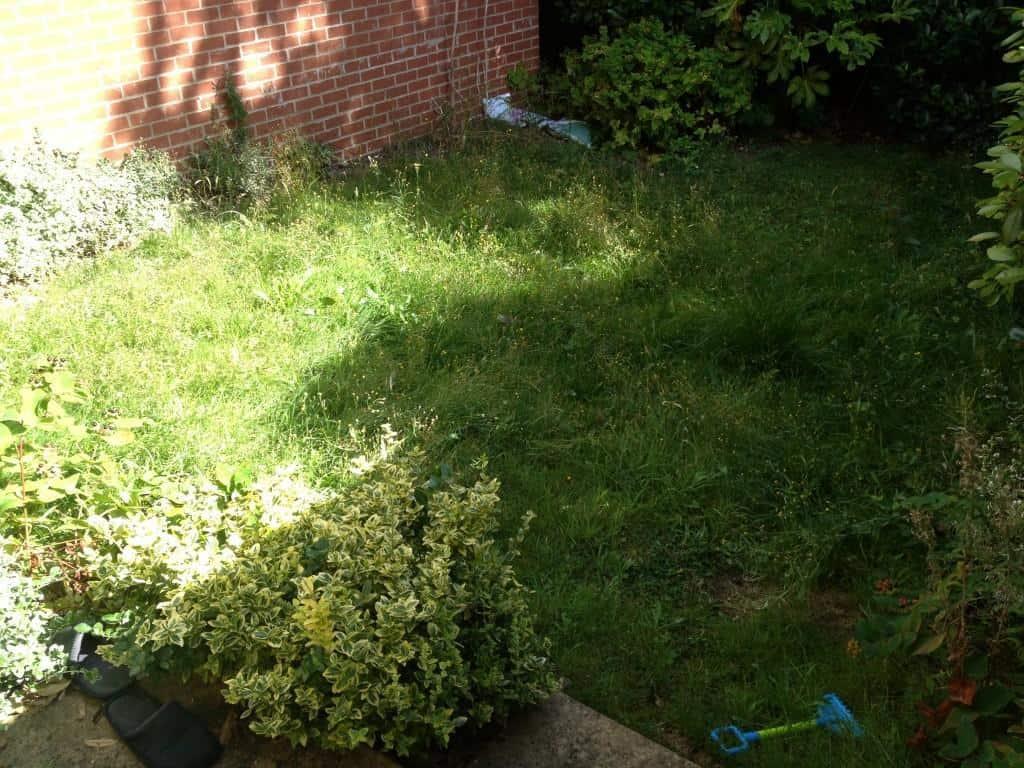 long grass needs mowing