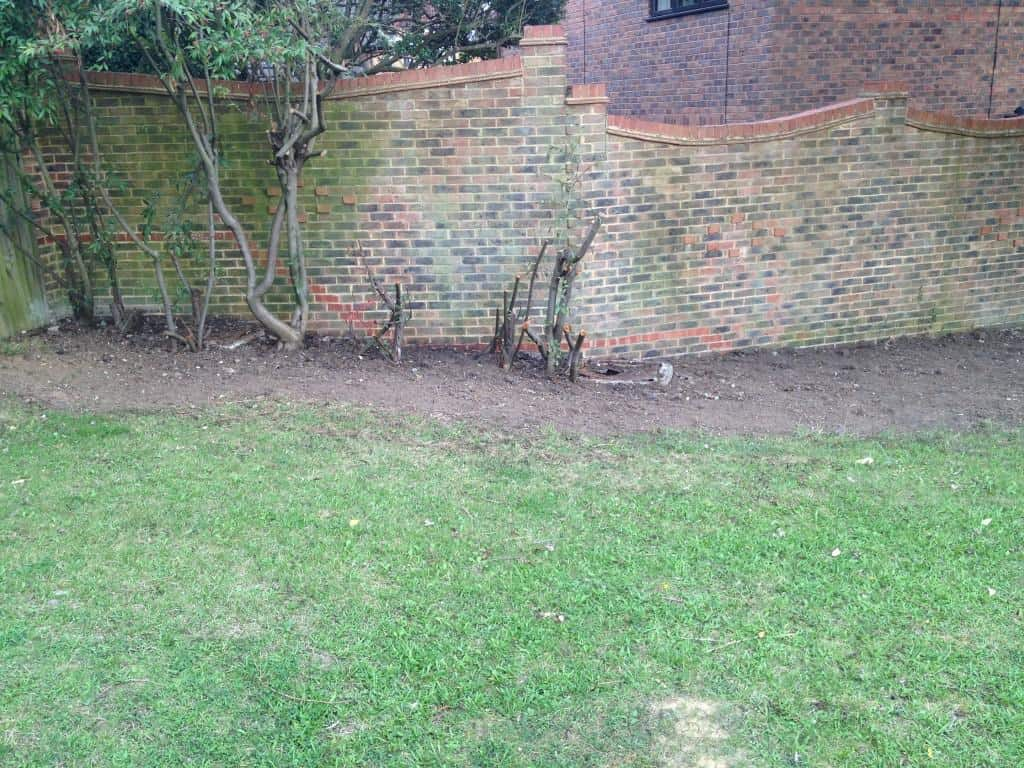 hedge partially removed and site cleared