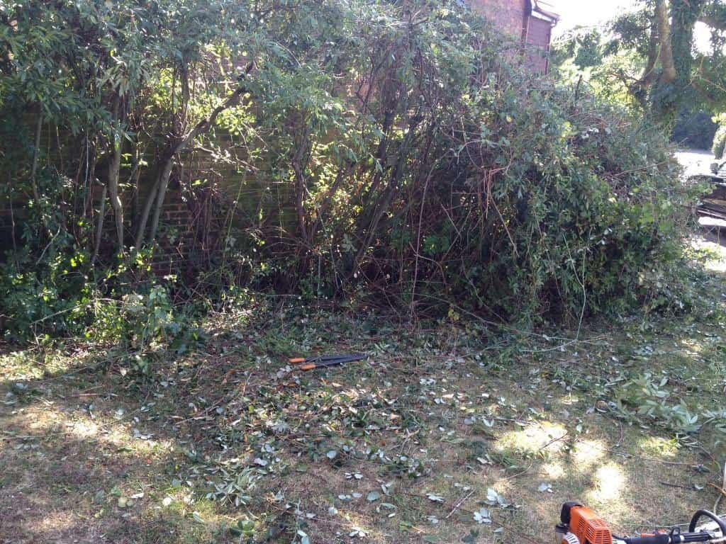 dying hedge to be restored