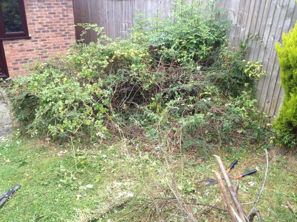 Hedge work - Lower Earley