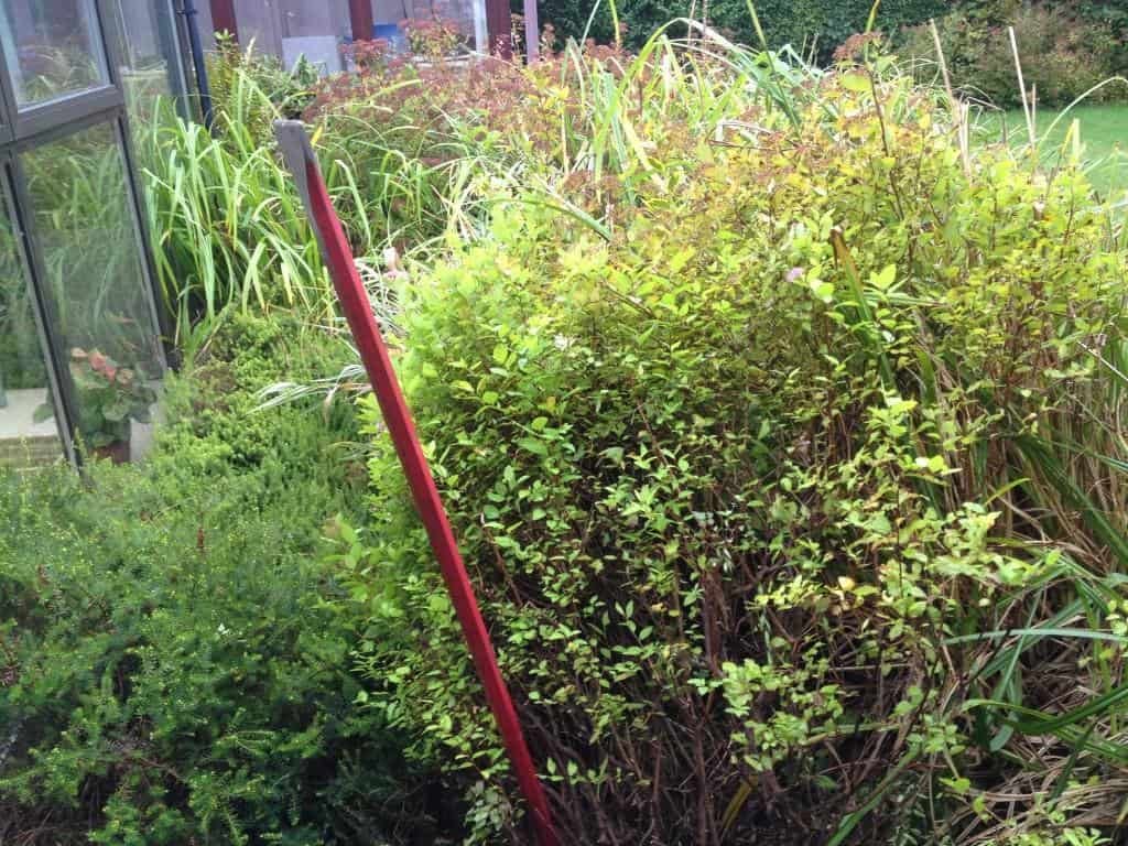 garden area with pond needs shrubs removal