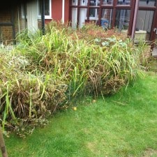 garden pond area to be cleared