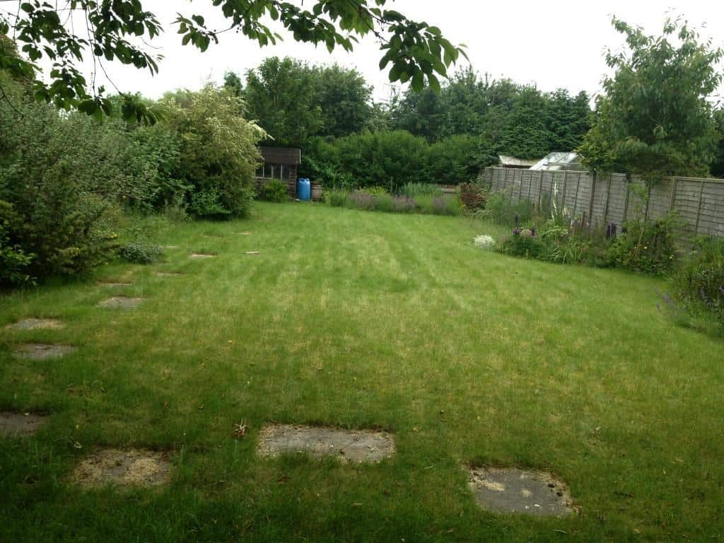 before lawn treatment