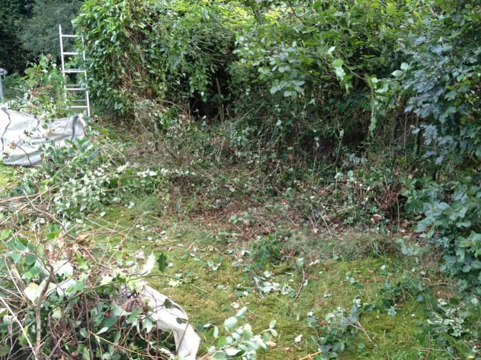 Garden clearance to prepare for grass seeds - Wokingham