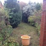 garden tidy up - overgrown conifer