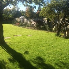 after lawn scarification