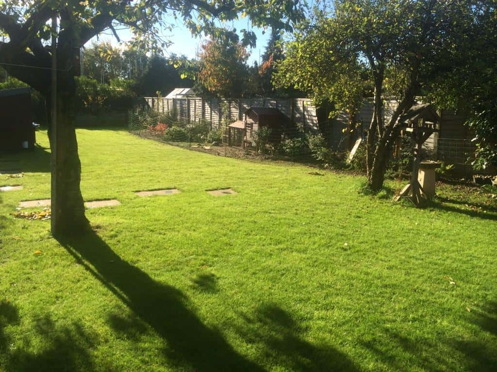 Lawn maintenance and scarification - after treatment