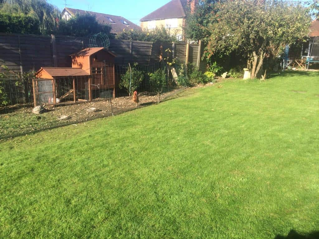 after lawn scarification and feed