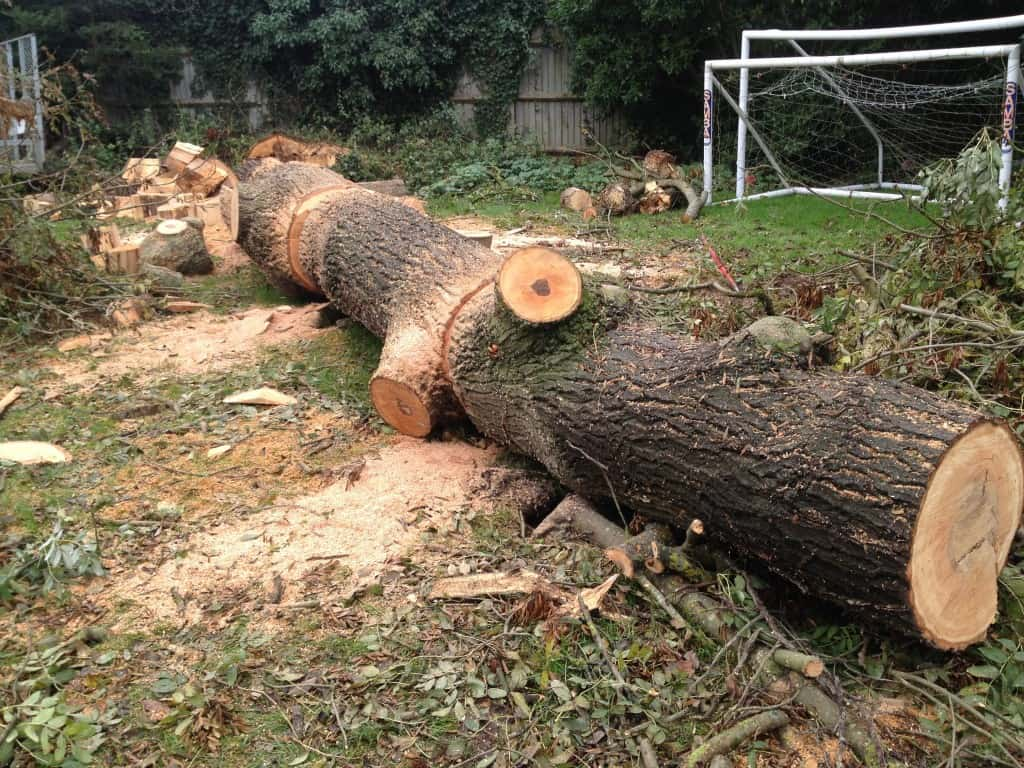 fallen tree cut up