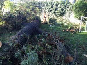Tidy Gardens tree clearance service