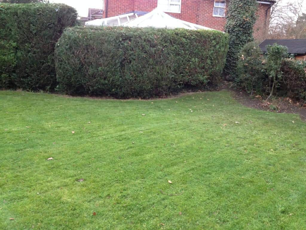 Hedge trim and general tidy up - Bracknell
