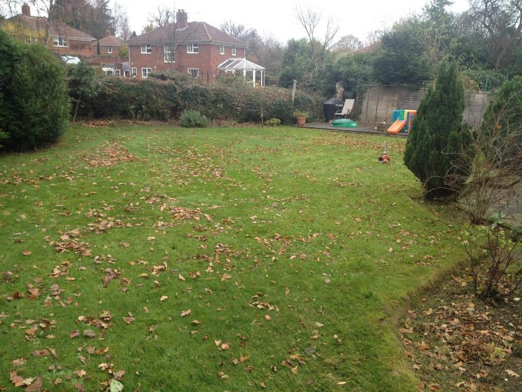 garden before clearing leaves and hedge trim
