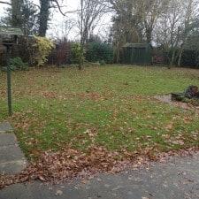 oak tree leaves left on a lawn