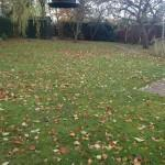leaf clearing service