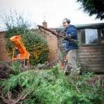 Paul Tidy Gardens shredding trees