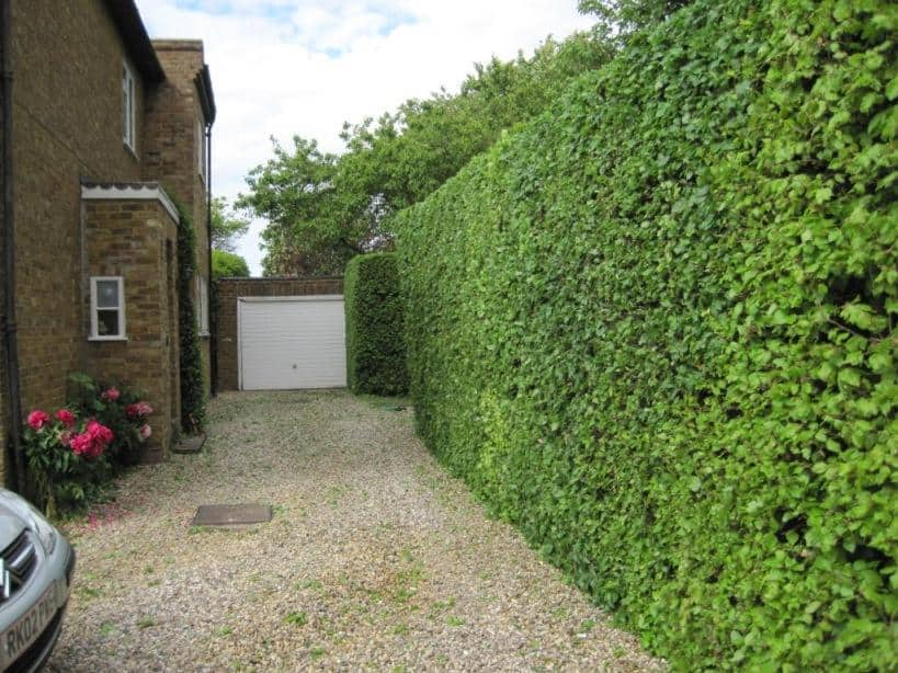 Hedge cutting / trimming - Tidy Gardens