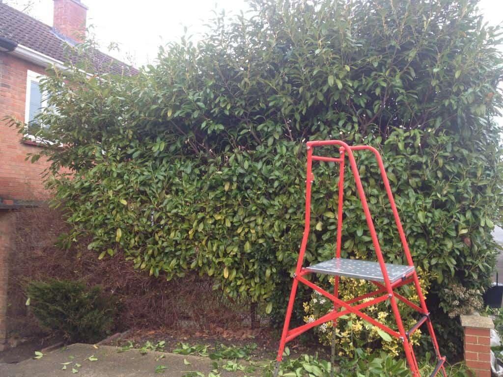 hedge trimming maidenhead