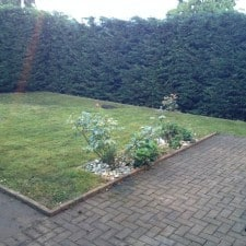 leylandaii hedge reduction