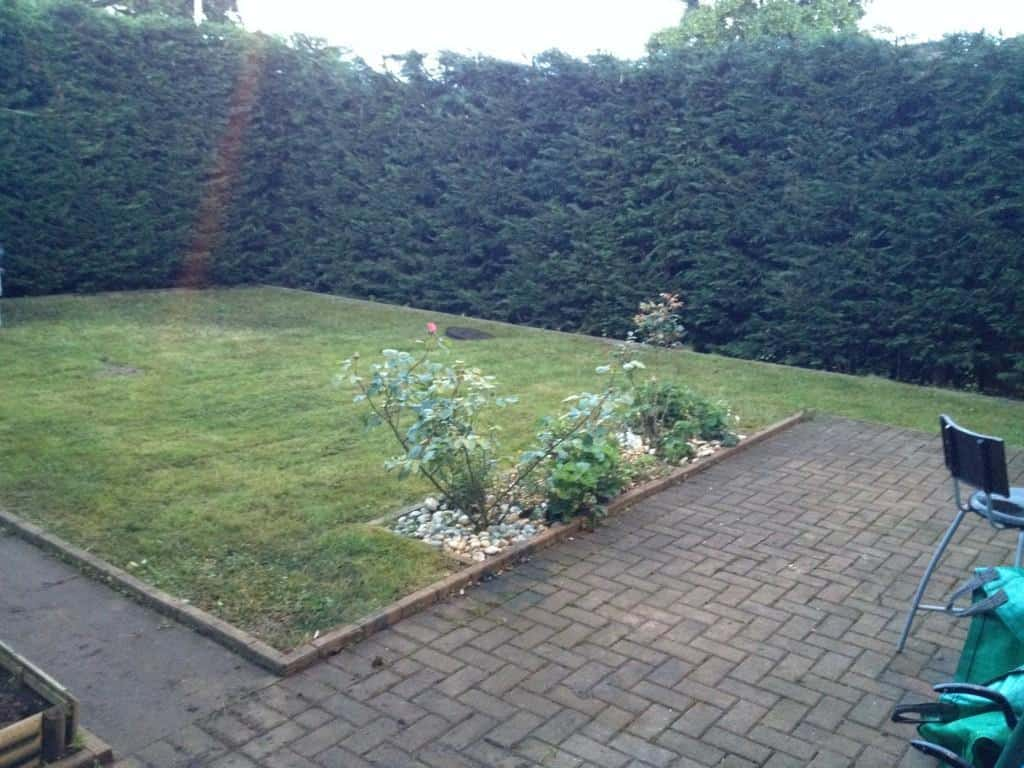 Hedge reduction | trimming  - Leylandii