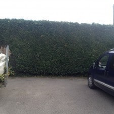 hedge cutting specialist