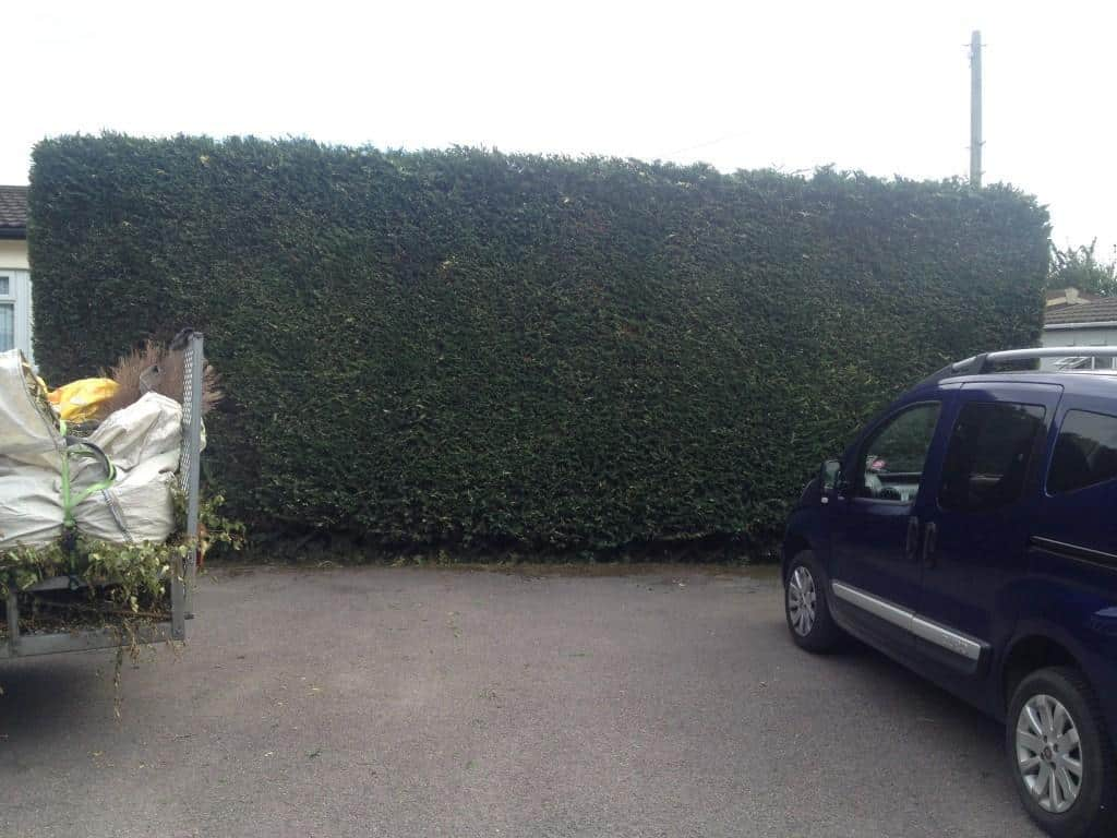 Hedge cutting specialists