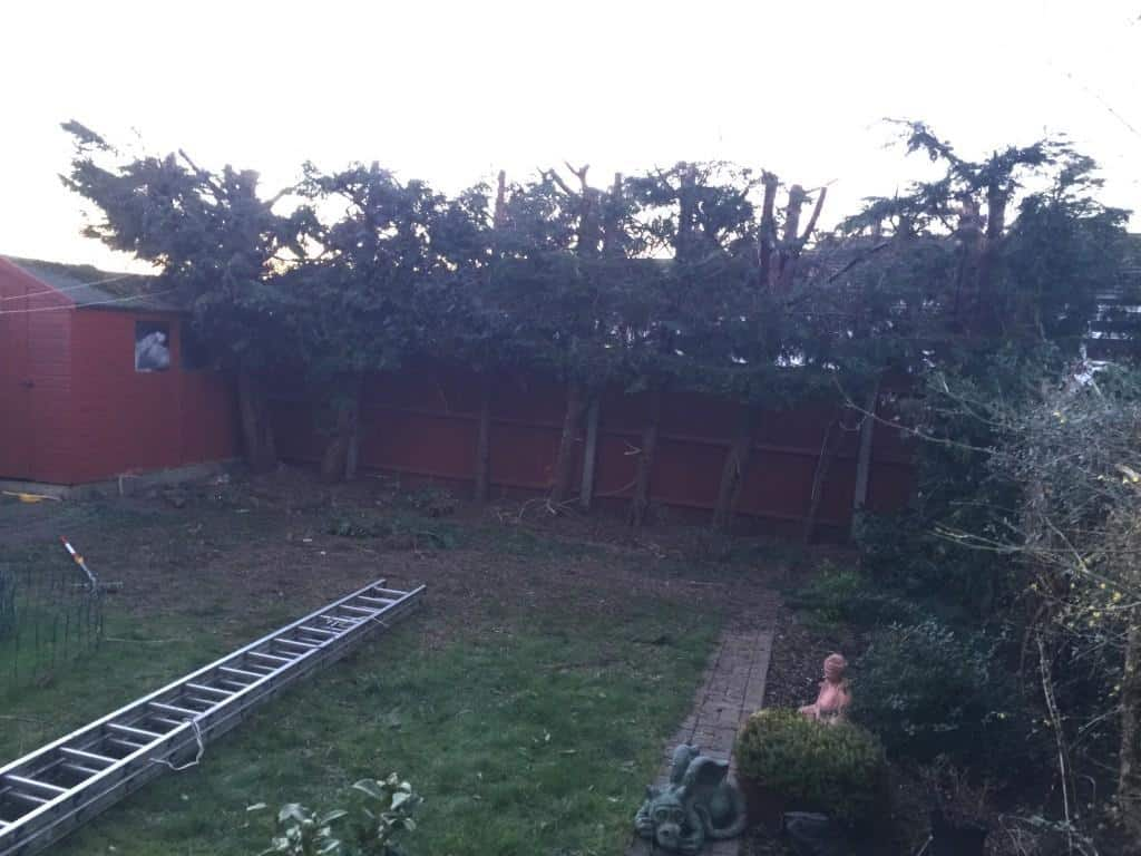 hedge reduction trim