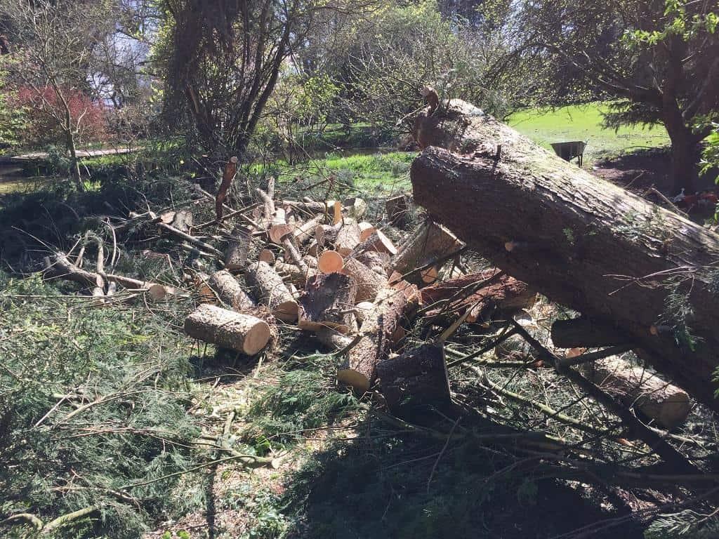fallen tree removal service