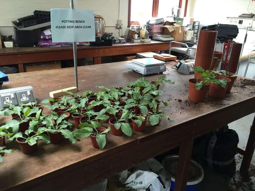 Repotting-plants