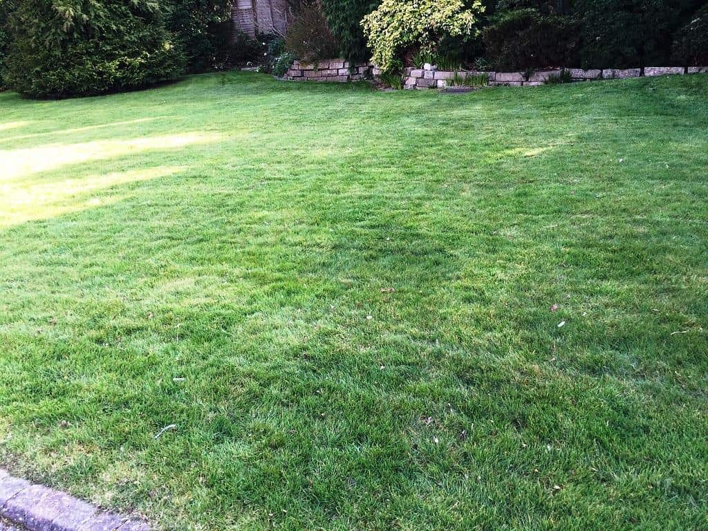 lawn treatment aerating and top dressing