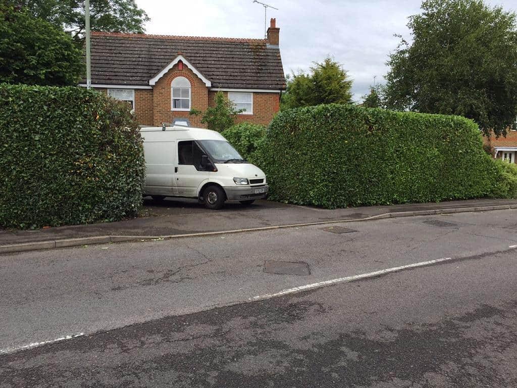 laurel hedge after trimming