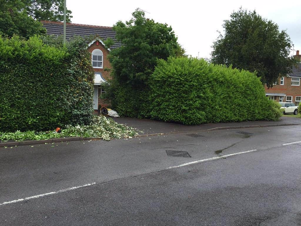 Keeping your hedges neat