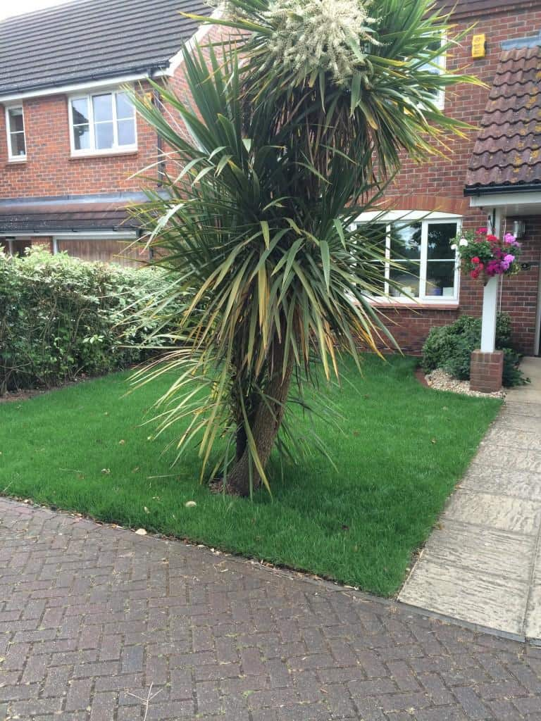 garden returfing job. Photo taken two weeks after job was completed