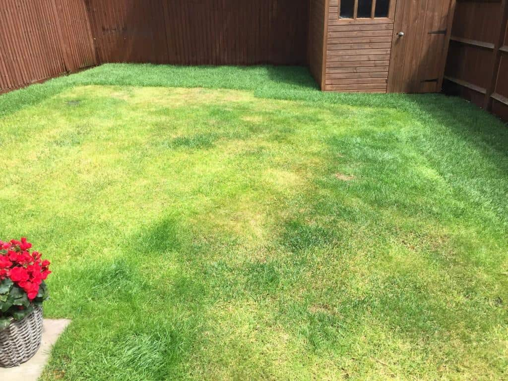 lawn repair. Returfed around the perimeter
