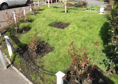 front yard landscaping BEFORE