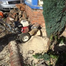 tree stump grinding service in Reading, Berkshire