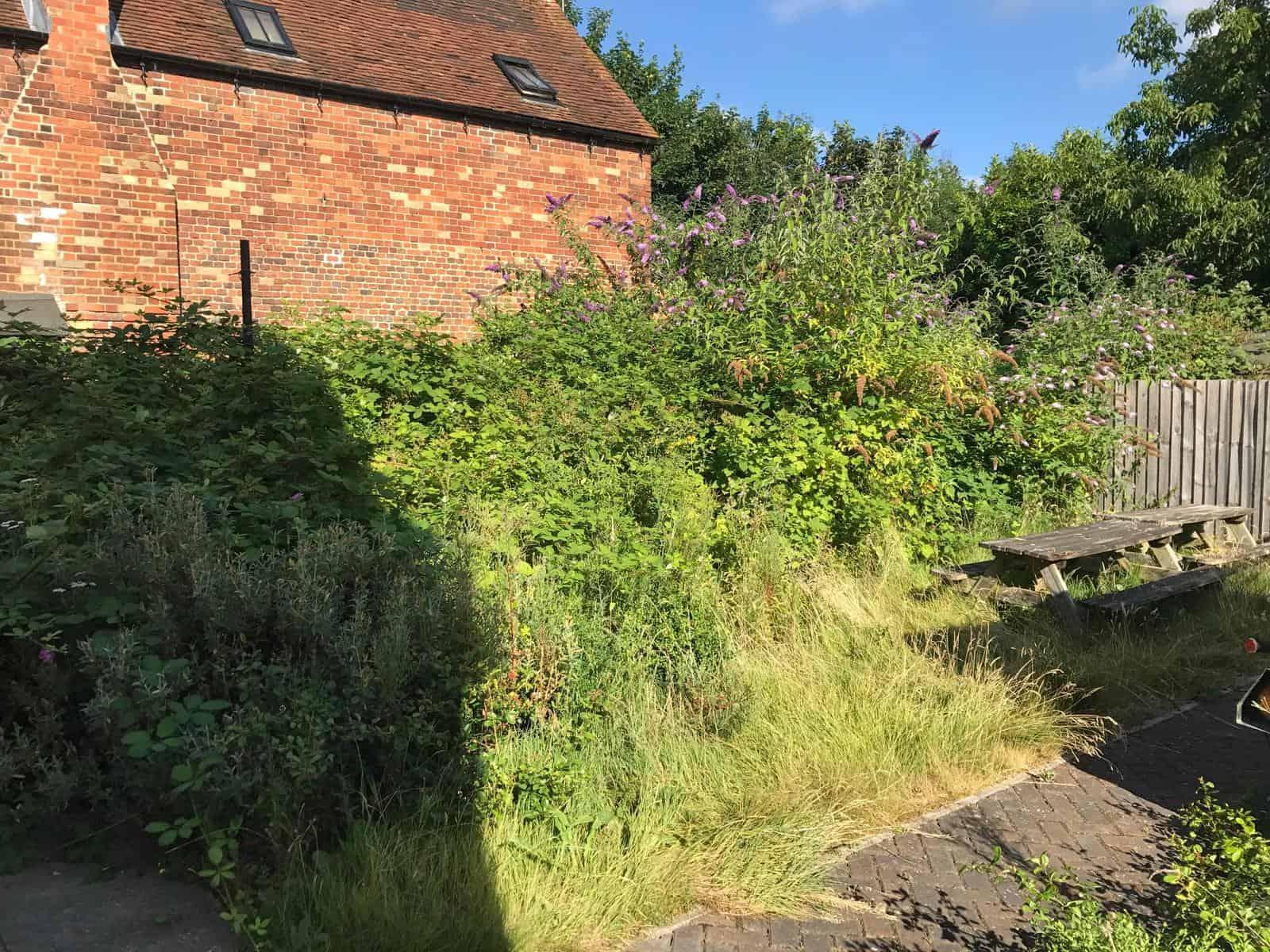 Brambles - garden tidy up