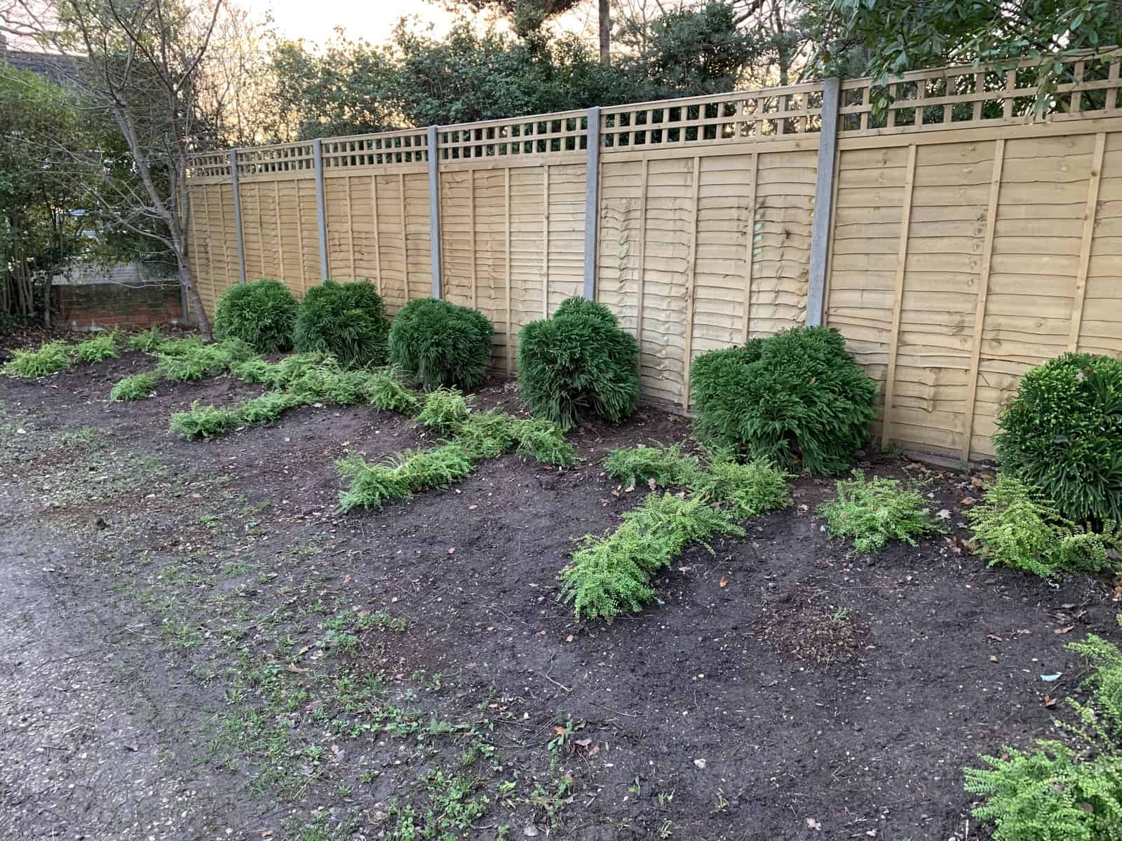 Planting in Shinfield, Reading.