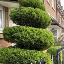 topiary work - gardens in Reading