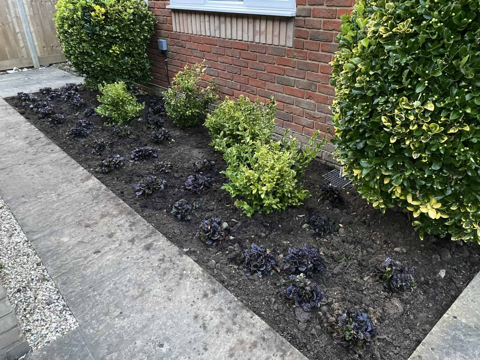 Little planting in Tilehurst